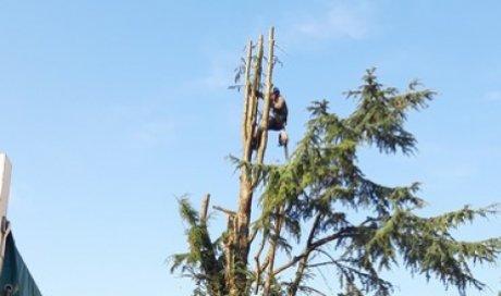 Paysagiste pour élagage d'arbre à Annecy