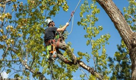 Artisan paysagiste pour l'élagage d'un arbre chez un particulier Annecy