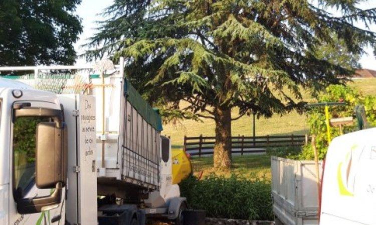abattage d'un cèdre sur Argonay (Avant)